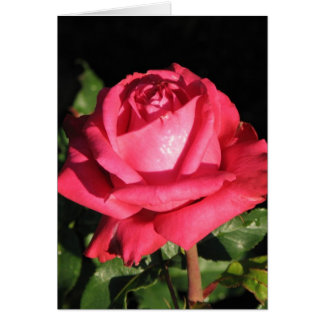 Peter Frankenfeld Hybrid Tea Rose 001 Card
