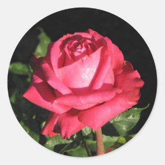Peter Frankenfeld Hybrid Tea Rose 001 Classic Round Sticker