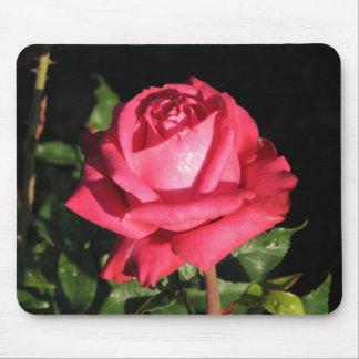 Peter Frankenfeld Hybrid Tea Rose 001 Mouse Pad