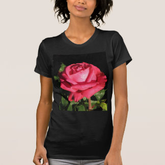Peter Frankenfeld Hybrid Tea Rose 001 T-Shirt
