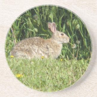 Peter Rabbit Beverage Coaster