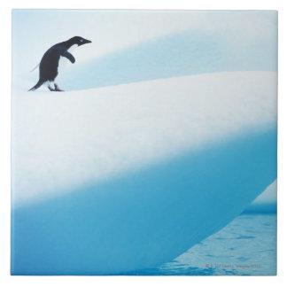 Petermann Island, Antarctica Tile