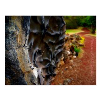 Petersen Rock Garden Postcard