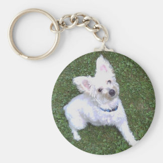 Petey the Pom-A-Poo ~ Nothing gets him down Basic Round Button Keychain
