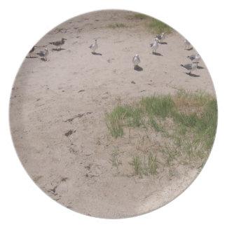 Petición de gaviotas en la playa platos
