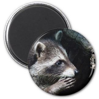 Petición del mapache imán redondo 5 cm