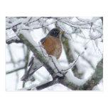 Petirrojo americano en la postal de la nieve