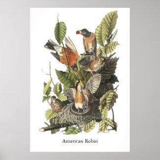 Petirrojo americano impresión de Juan Audubon Impresiones