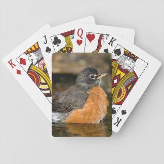 Petirrojo americano que baña 2 cartas de póquer