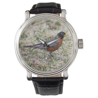 Petirrojo americano relojes de pulsera