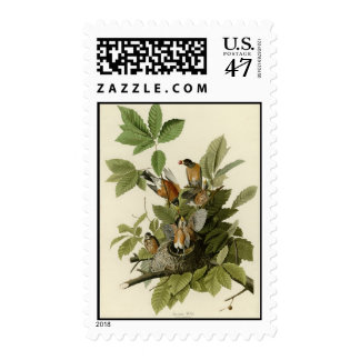 Petirrojo americano sello