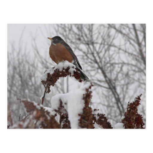 Petirrojo de la nieve postal