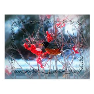 Petirrojo en el árbol tarjeta postal