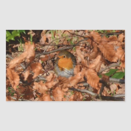 Petirrojo en el bosque etiqueta
