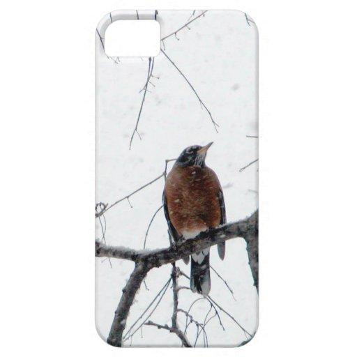 Petirrojo en la nieve iPhone 5 cárcasa