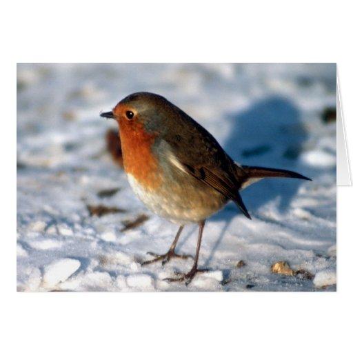 Petirrojo en la nieve tarjeta de felicitación