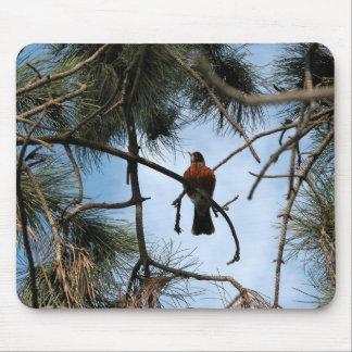 Petirrojo en un árbol de pino alfombrillas de ratón