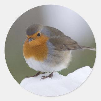 Petirrojo europeo en pegatinas de la nieve etiquetas redondas