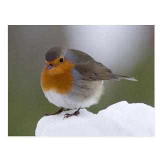 Petirrojo europeo en posstcard de la nieve tarjeta postal