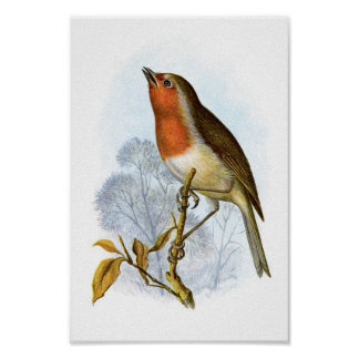 Petirrojo europeo - rubecula del Erithacus Posters
