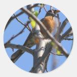 Petirrojo hermoso en el árbol pegatinas redondas