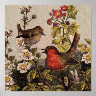Petirrojos del vintage para los amantes del pájaro póster