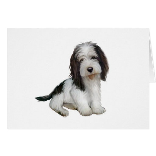 Petit Basset Griffon Vendeen (B) - Black-white sit Greeting Card