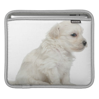 Petit chien lion or Little Lion Dog puppy iPad Sleeves