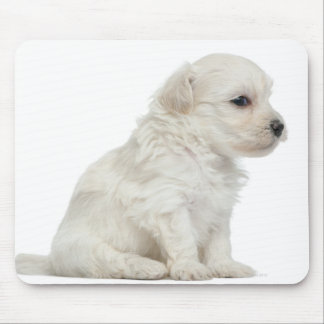 Petit chien lion or Little Lion Dog puppy Mouse Pad