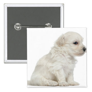 Petit chien lion or Little Lion Dog puppy Pinback Button