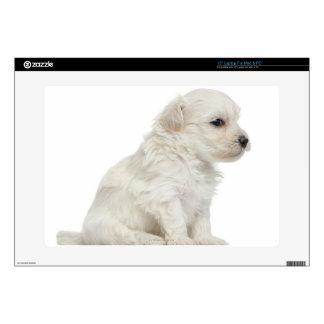 """Petit chien lion or Little Lion Dog puppy 15"""" Laptop Skin"""