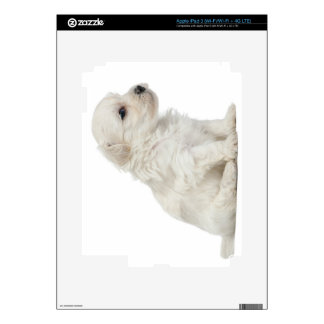 Petit chien lion or Little Lion Dog puppy Skin For iPad 3