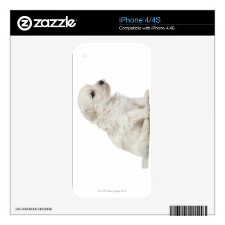 Petit chien lion or Little Lion Dog puppy Skin For iPhone 4S