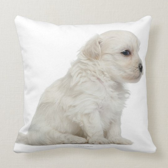 Petit chien lion or Little Lion Dog puppy Throw Pillow