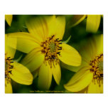 Petite Sunflowers Flower Photography Poster Print