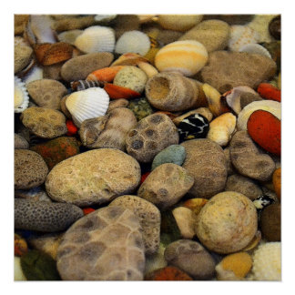 Petoskey Stones with Shells ll Poster