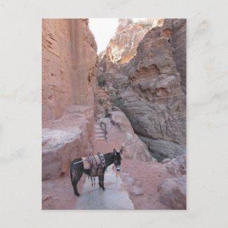 Petra Donkey Postcard postcard