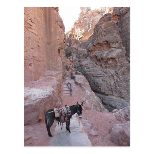 Petra Donkey Postcard