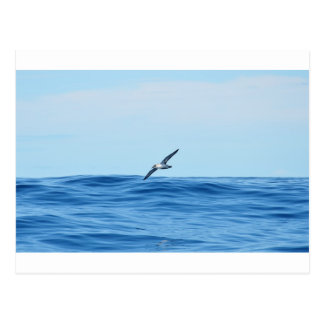 Petrel In Flight Postcard
