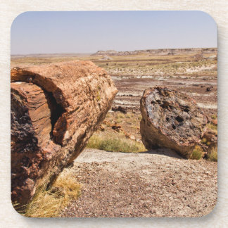 PETRIFIED DESERT COASTER