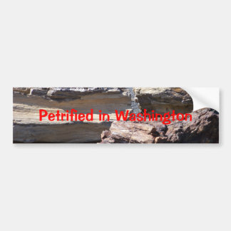 Petrified en Washington