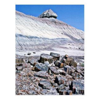 Petrified Forest - Desert National Park Postcard