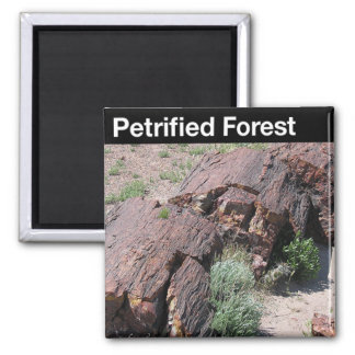 Petrified Forest National Park Fridge Magnets