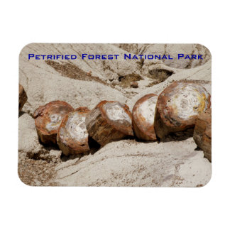Petrified Forest National Park Rectangle Magnets