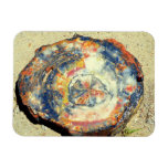 Petrified Forest National Park Rectangular Magnets