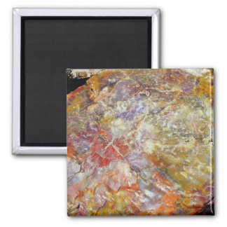 Petrified wood 2 inch square magnet