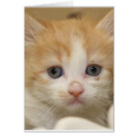 Pets Exclusive Photography Card