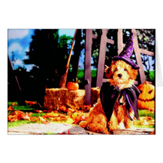 Pets Love Dressing Up Card