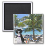 Pets on Vacation Fridge Magnet