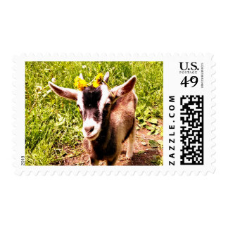 Petting Zoo Invite - Matching Postage